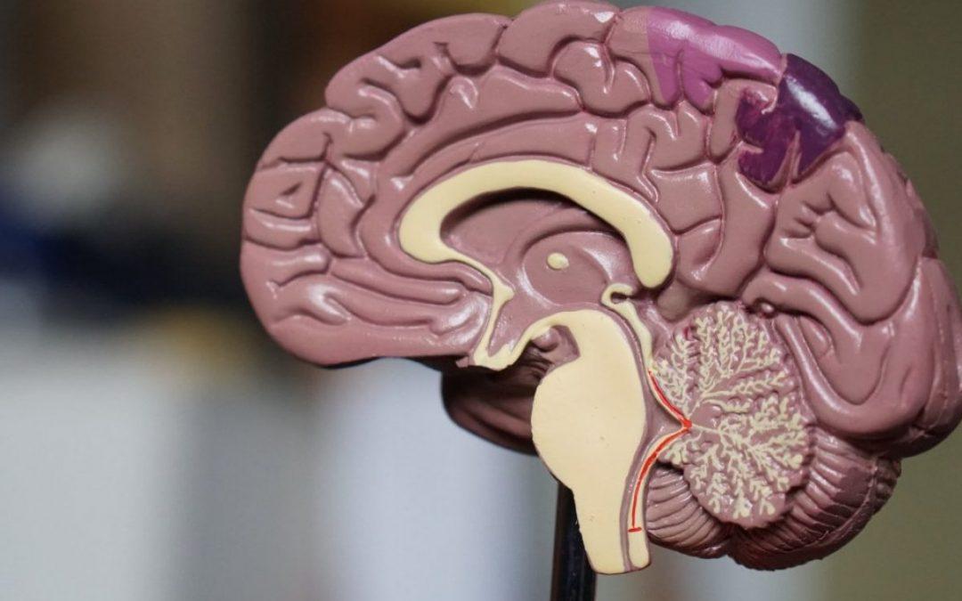 El TEA i l'Epilèpsia